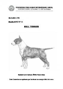 bull terrier - Fédération Cynologique Internationale