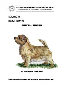 norfolk terrier - Fédération Cynologique Internationale